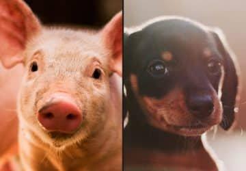 Nyílt levél azokhoz, akik imádják a kutyákat és macskákat, de mégis esznek húst