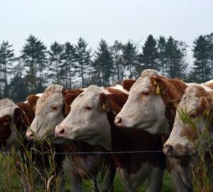 Az állattenyésztés és a vadvilág pusztulásának kapcsolata