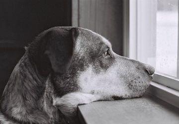 A kutyák nem is olyan okosak, mint gondoltuk. De miért nem számít ez?