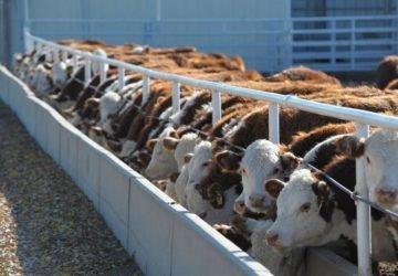Egy új tanulmány szerint a legjobb dolog amit tehetsz a bolygóért, ha elkerülöd az állati termékeket