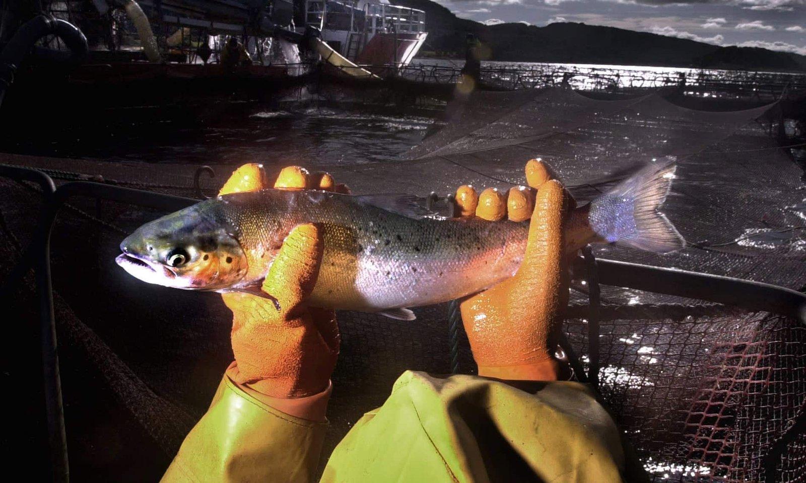 A halak szenvednek a horogtól, még ha vissza is dobják őket