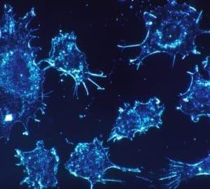 Dr-Greger-Hogyan-nyerj-háborút-a-rák-ellen