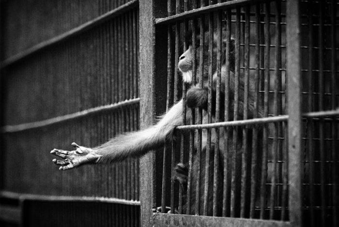 Fogságba tartott állati viselkedésformák