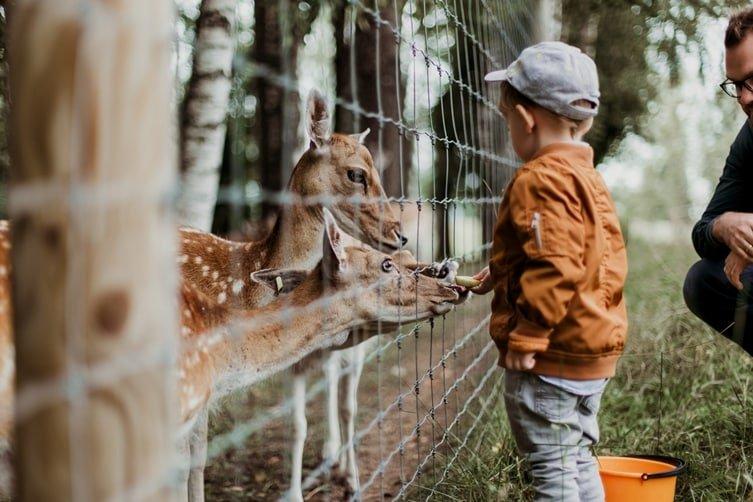 Hogyan torzítják el az állatkertek a természetről alkotott képünket?
