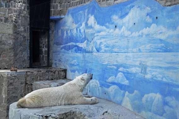 Szomorú jegesmedve az állatkertben