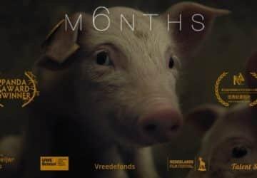 m6nths vegán film