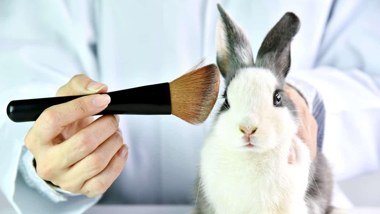 Kína betiltotta az állatkísérleteket a már kiadott termékek esetében