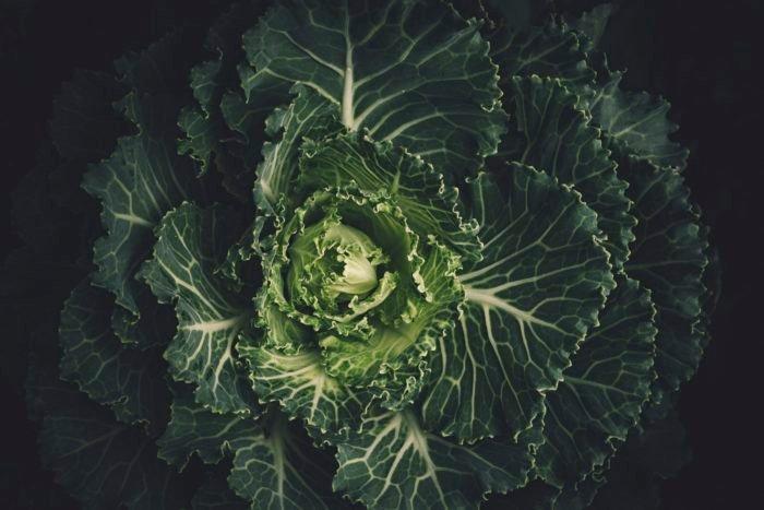 Az ősember fejlődése a legjobb példa a vegán étrend hatékonyságára