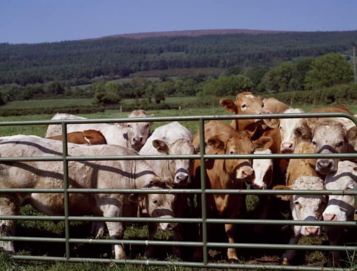 Földterület 75%-át állattenyésztésre használjuk