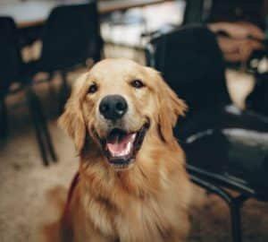 Mentett kutyákat árulnak Kaliforniában az állatkereskedések