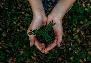 Föld Napja - hogyan legyél hiteles környezetvédő