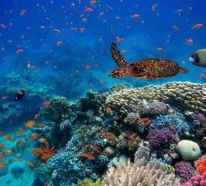 1 millió fajt fenyeget a kihalás, beleértve az embert is