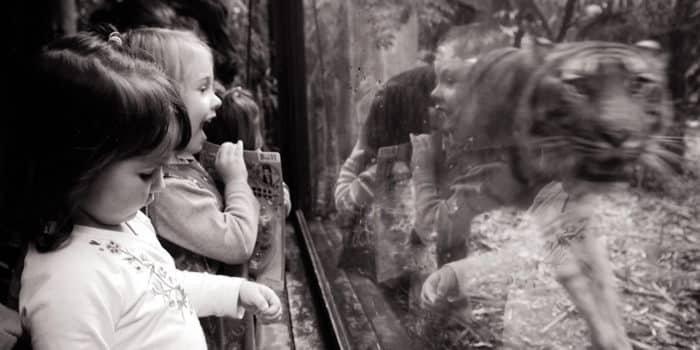Az állatkertek nem tanítják a gyermekeket az állatvédelemre.