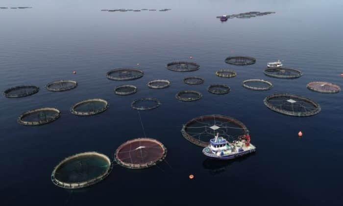Globális nagyipari halászat