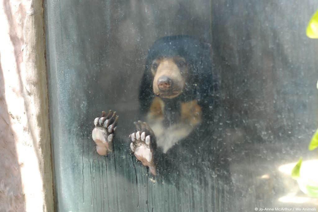 Tévhitek az állatkertről