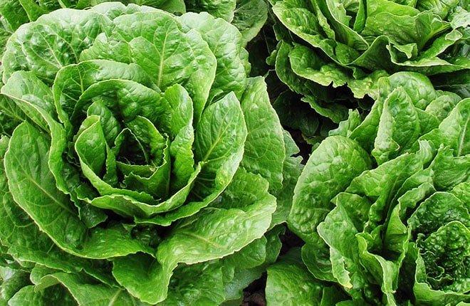 saláta-leveles-zöldségek