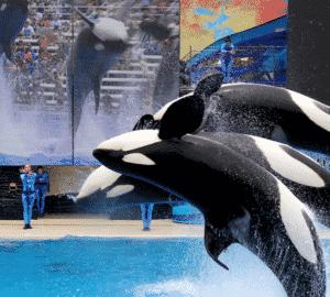 TripAdvisor jegyek SeaWorld delfines és bálnás előadás