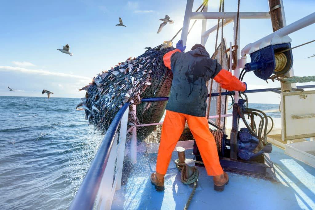 Ami valóban veszélyt jelent az óceánra, az a hal a tányérodon – nem a szívószál a poharadban