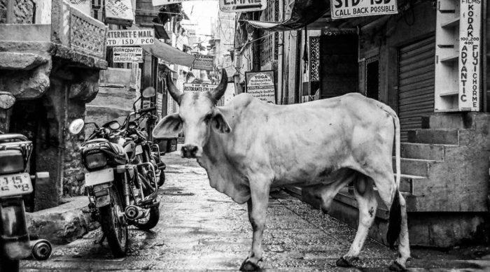 Bőripar Indiában