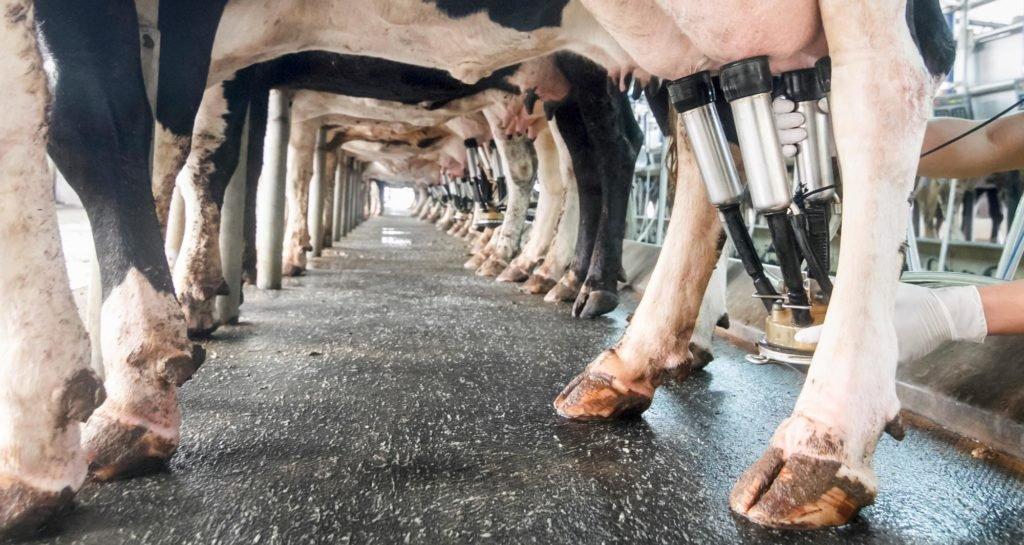 Problémák a tejiparral