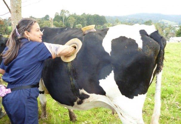 fisztula - lyuk a tehén oldalában
