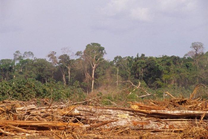 Hogyan járul hozzá a pálmaolaj az esőerdők irtásához?