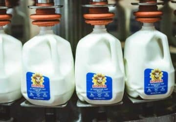Borden Dairy Company csődbe ment