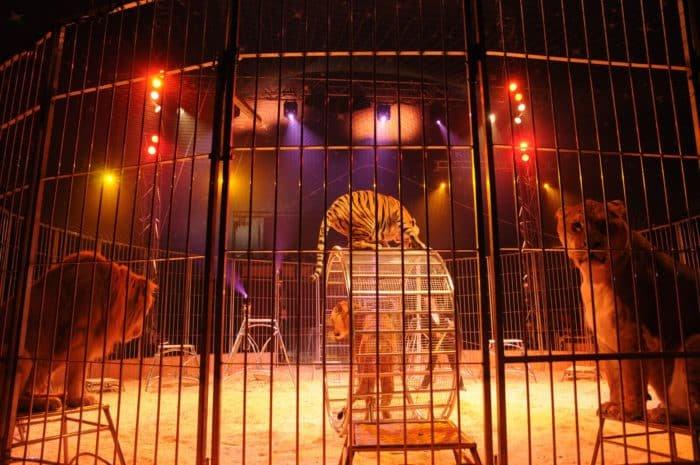 Cirkuszok és állatos showk