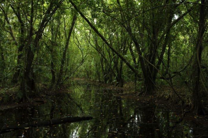 Erdőirtás az állattenyésztés miatt