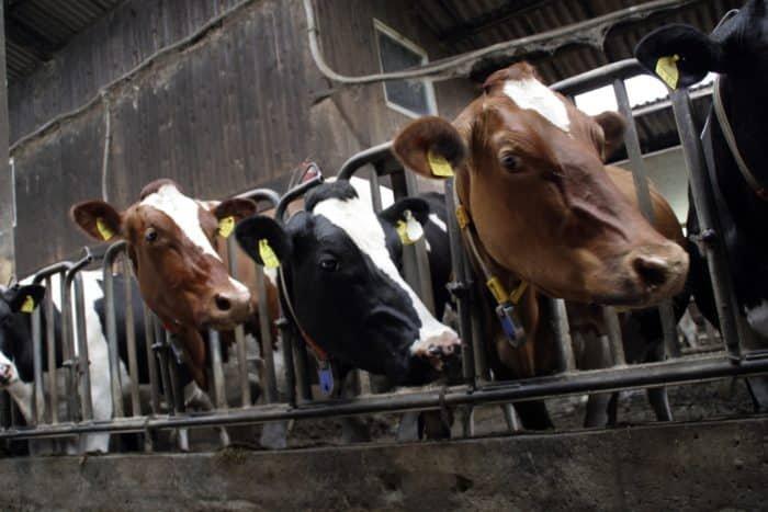 Nagyipari állattartás környezeti hatásai