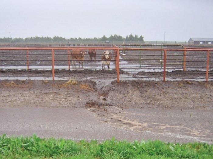 Vízpazarlás és vízszennyezés az állattenyésztésben