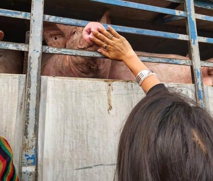 Vegán aktivisták az Animal Save Movement eseményen