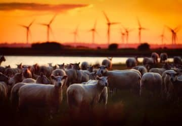 EU 200 milliót fordít a húsevés hirdetésére