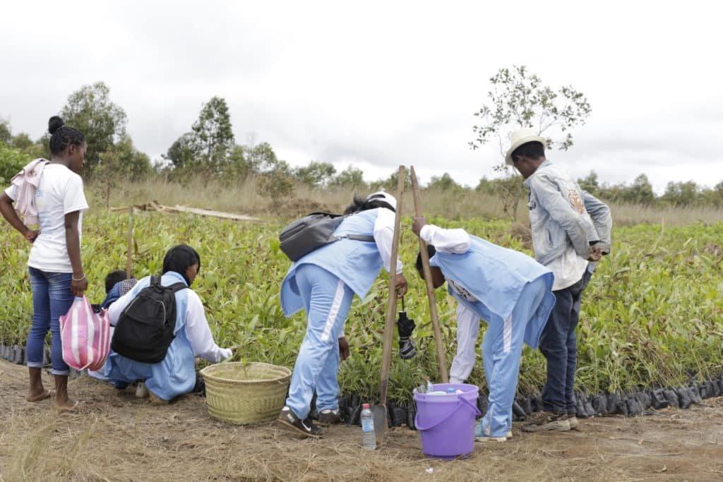 Madagaszkár faültetés