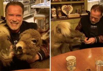 Arnold Schwarzenegger vegán ételeket eszik a koronavírus ellen - prove.hu