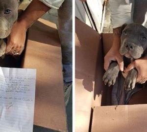Egy 12 éves fiú megmentette kutyáját az agresszív apa elől