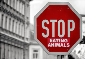 Stop Eating animals tábla