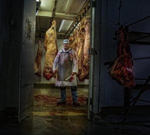 Hentes egy vágóhídon a levágott állatokkal, vérrel beborítva. A vágóhídi munka veszélyei.