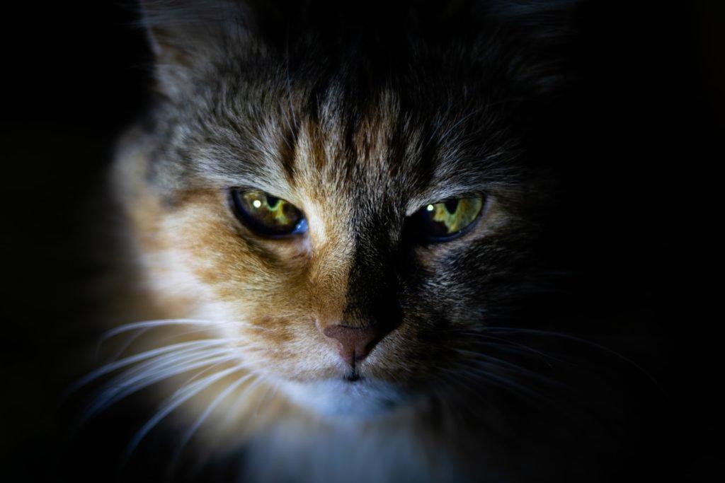 A házi macska rossz hatással van az ökoszisztémára