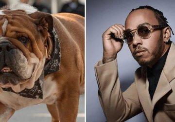 Lewis Hamilton kutyája vegán étrenden él