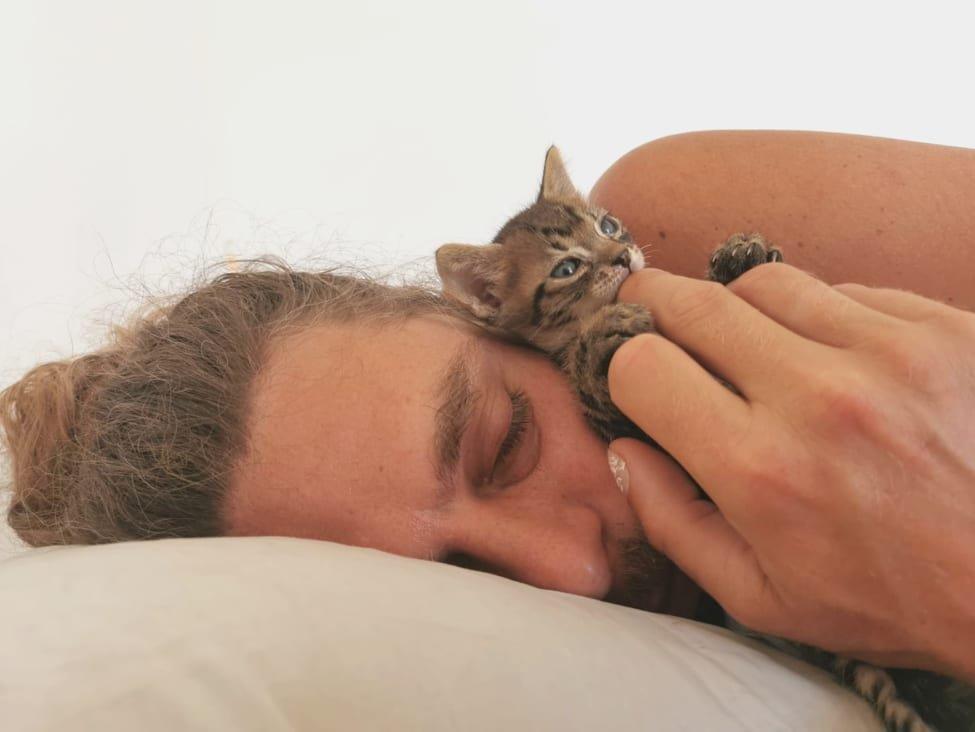 Steiner Kristóf macskája - jó vegán-e, aki hússal ment meg egy másik állatot