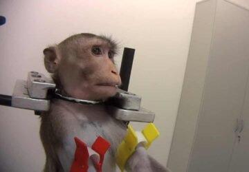 Újranyithat a német kutatólabor, ahol állatkínzás zajlik