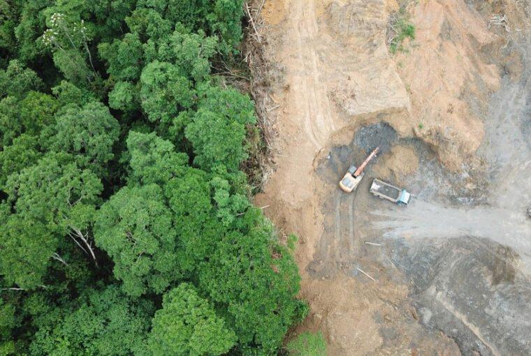 Az esőerdők csendes gyilkosa, a húsipar