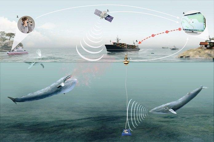 Új technológia több tucat bálnát menthet meg a haláltól