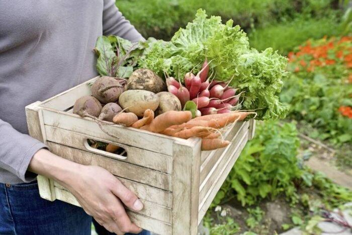 Kertészkedj, hogy pénzt spórolj a vegán étrenden - Veganuár