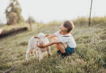 Emberségesebb veganizmus