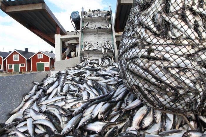 Nagyipari halászat