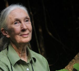 LEAD-Jane-Goodall.-OTH0172-04.-The-Jane-Goodall-Institute.-By-Shawn-Sweeney-scaled